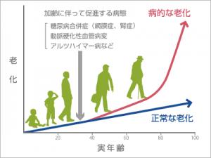 病的老化を進める危険因子