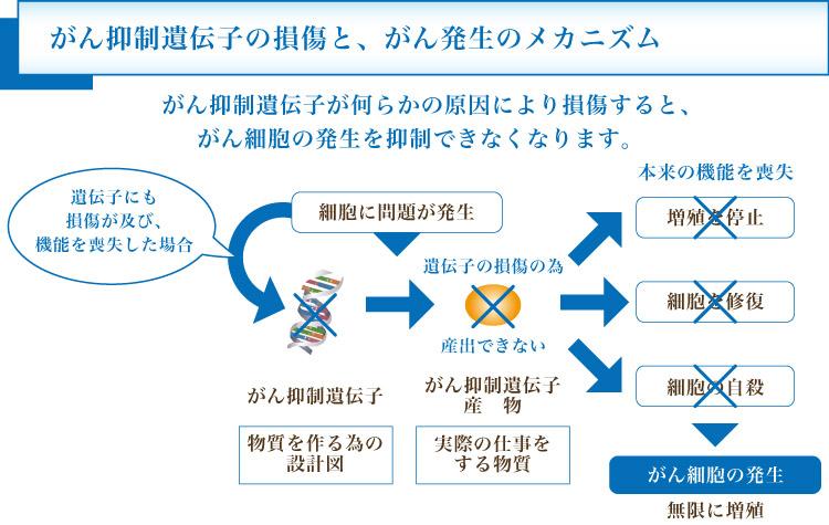 がん抑制遺伝子の限界